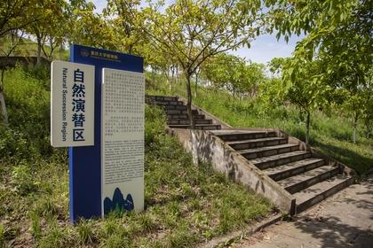 自然演替区位于重庆大学虎溪校区植物园南面山脉沿线,.
